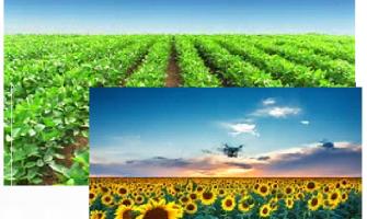 Sementes de Milho Soja e Sorgo
